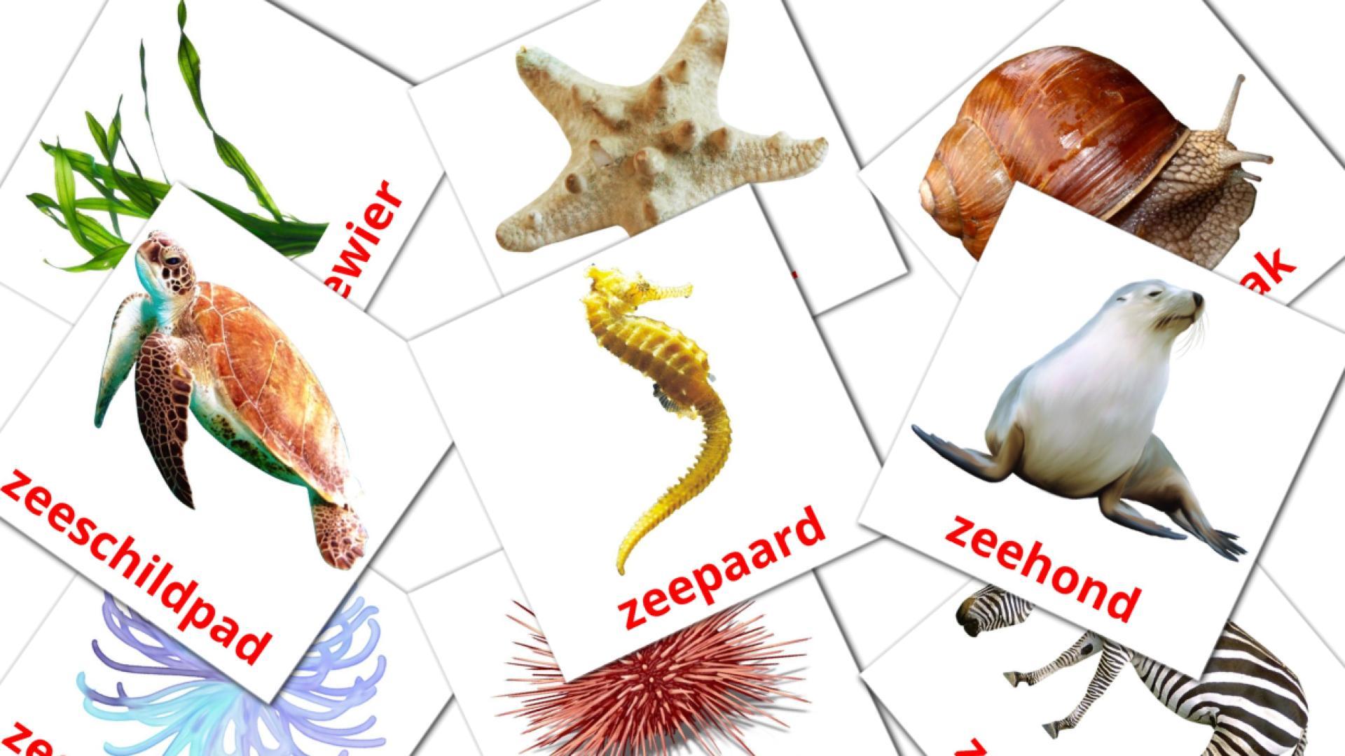 Карточи Домана Животные