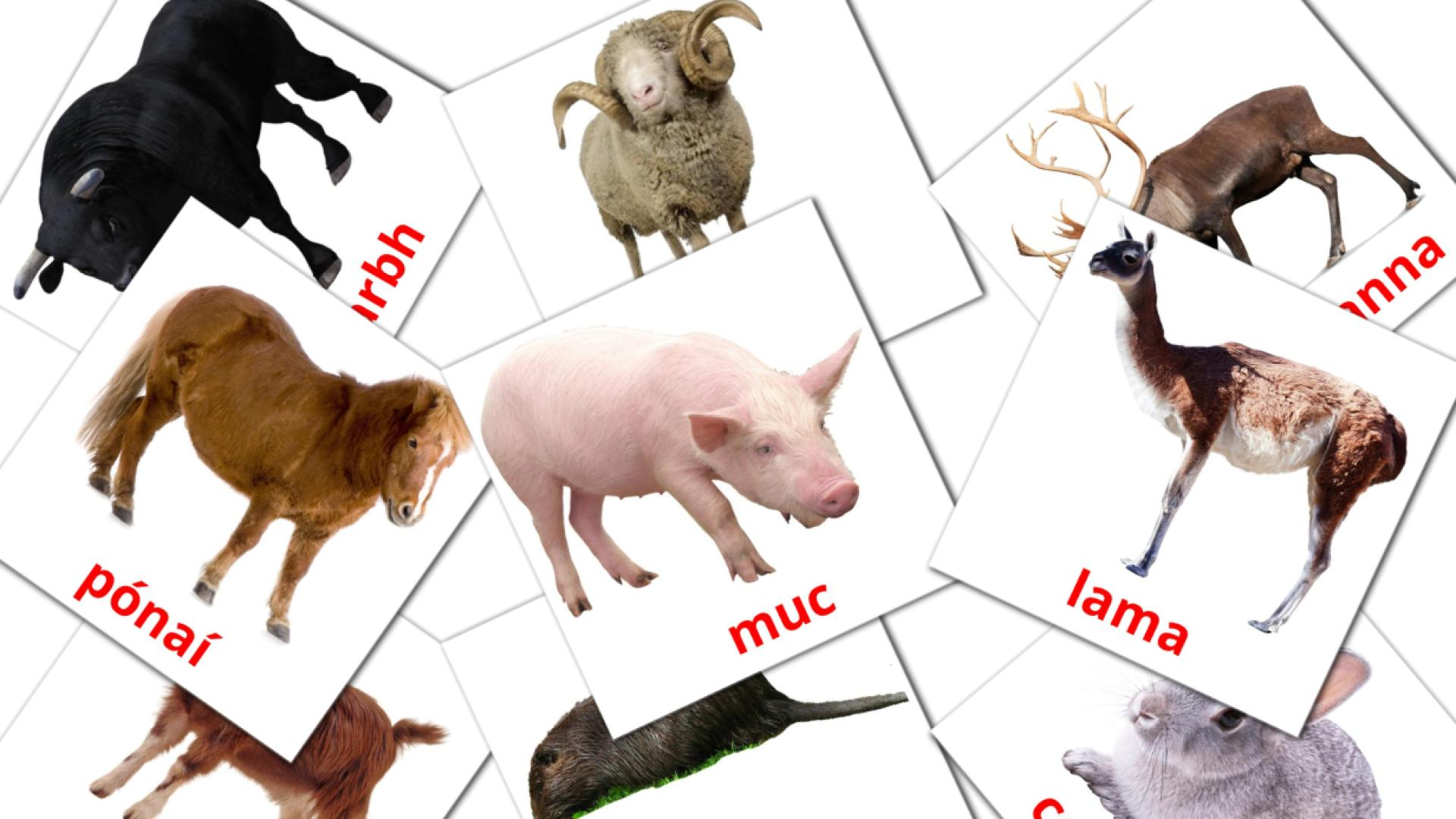 Animals flashcards