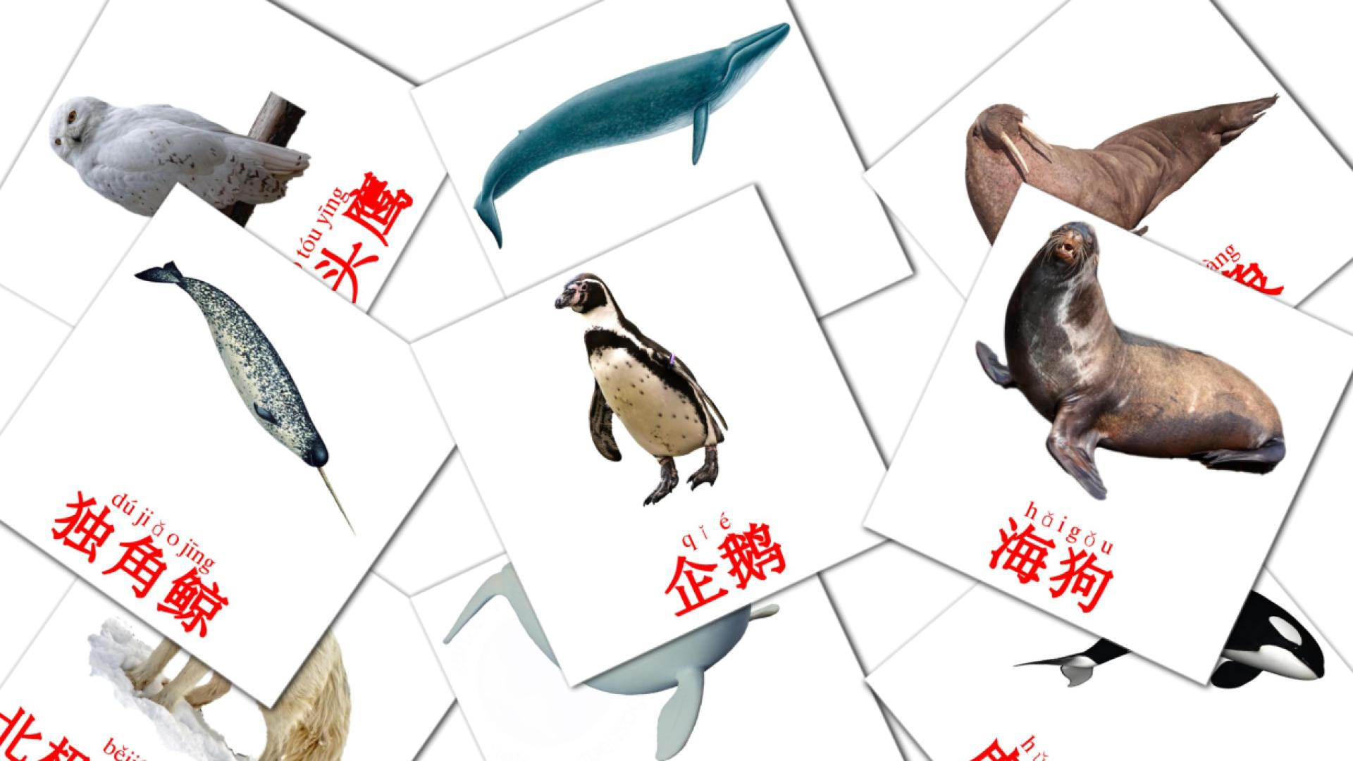 Arctic animals flashcards