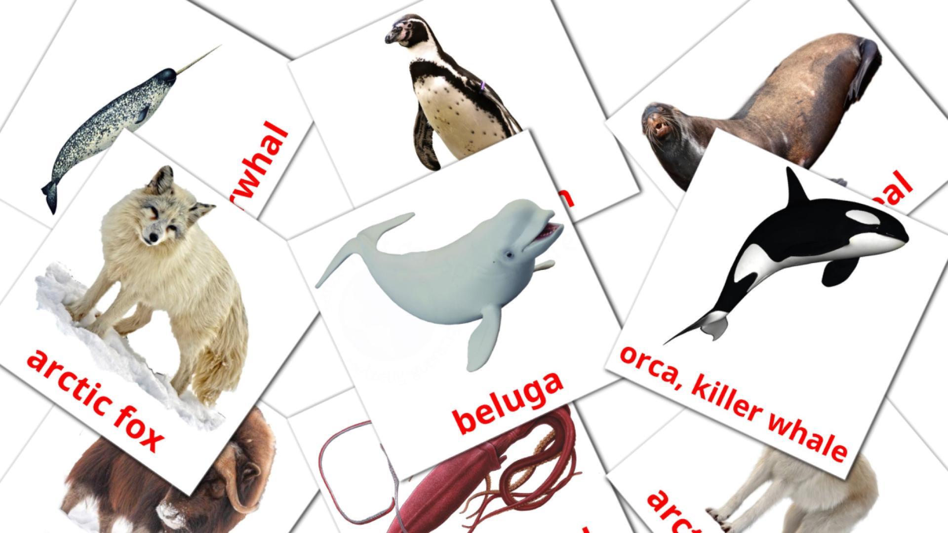 Карточи Домана Животные арктики