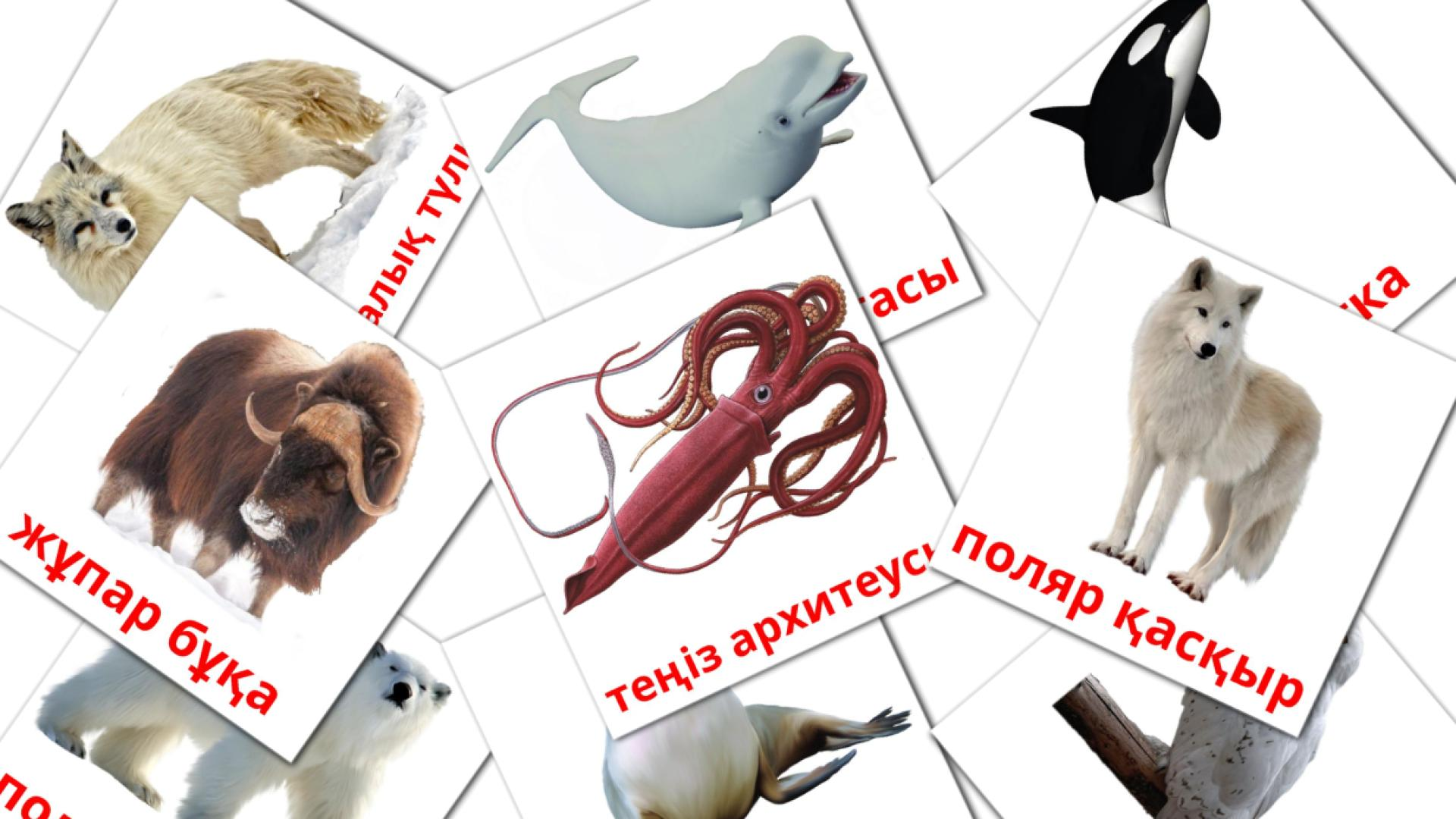 Arctic animals flashcards