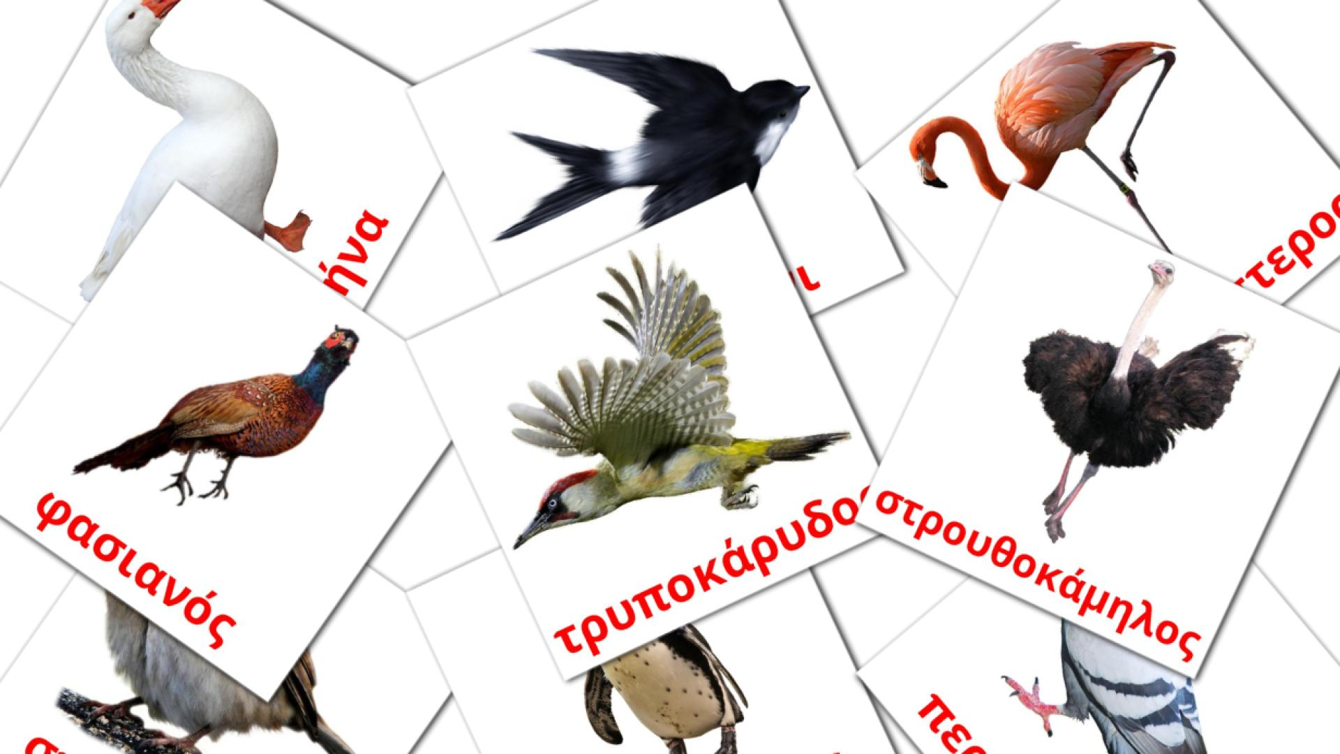 Карточи Домана Птицы