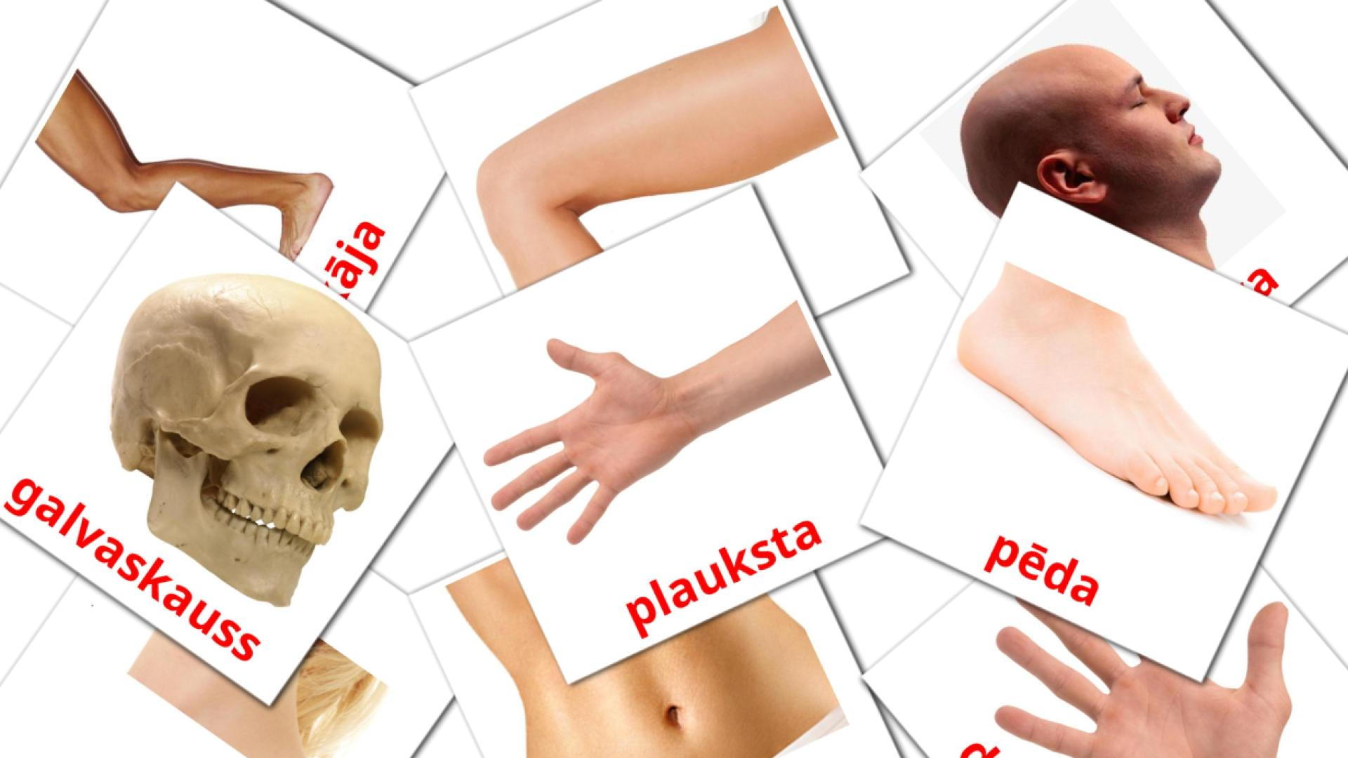 Body Parts flashcards