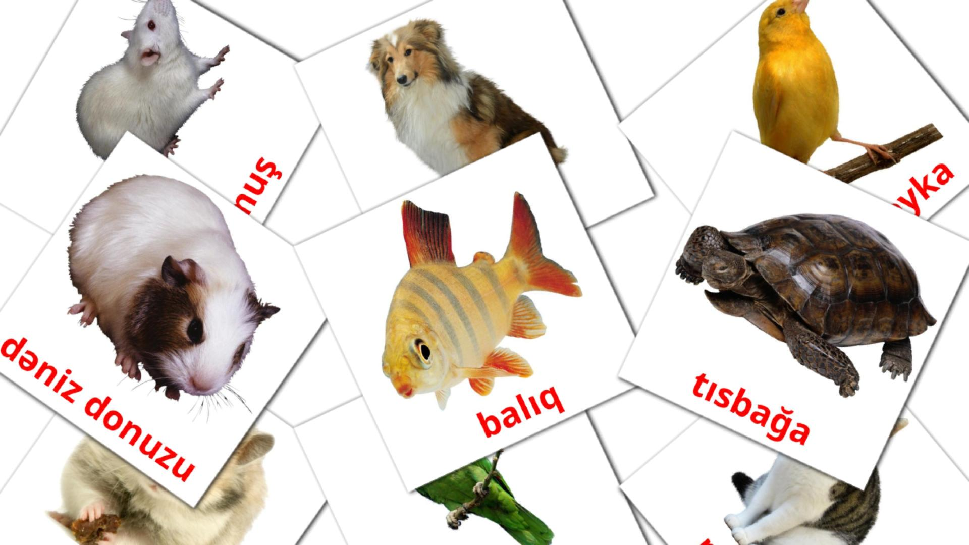 Domestic animals flashcards