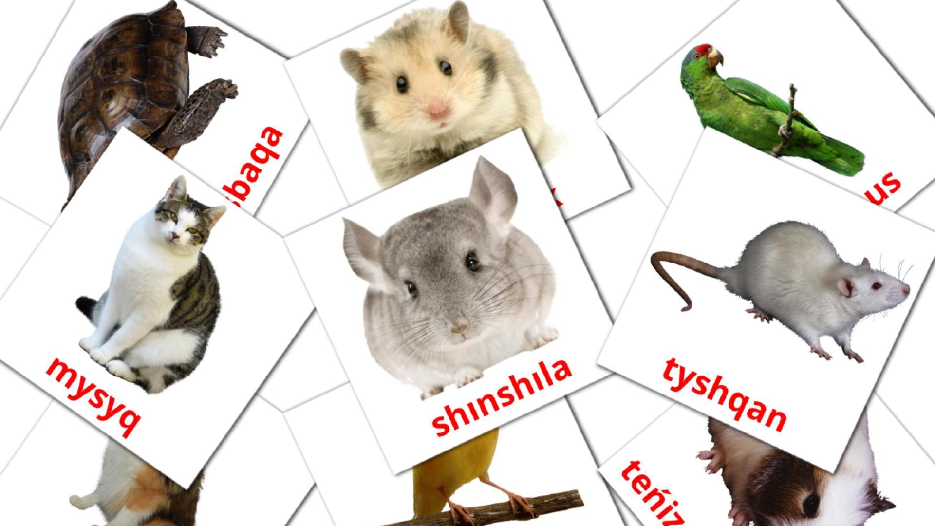 Карточи Домана Домашние животные