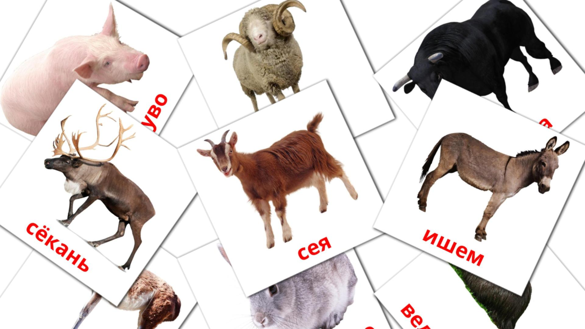 Farm animals flashcards