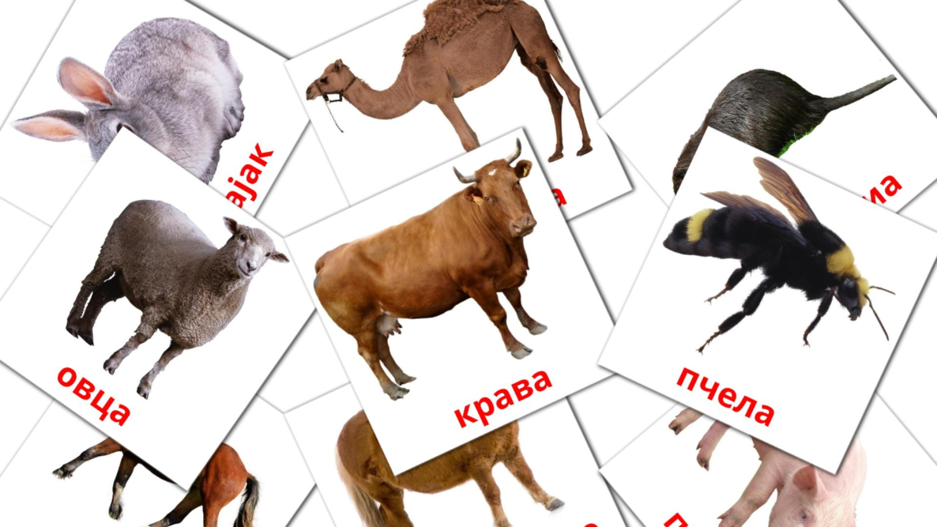 Карточи Домана Животные в деревне