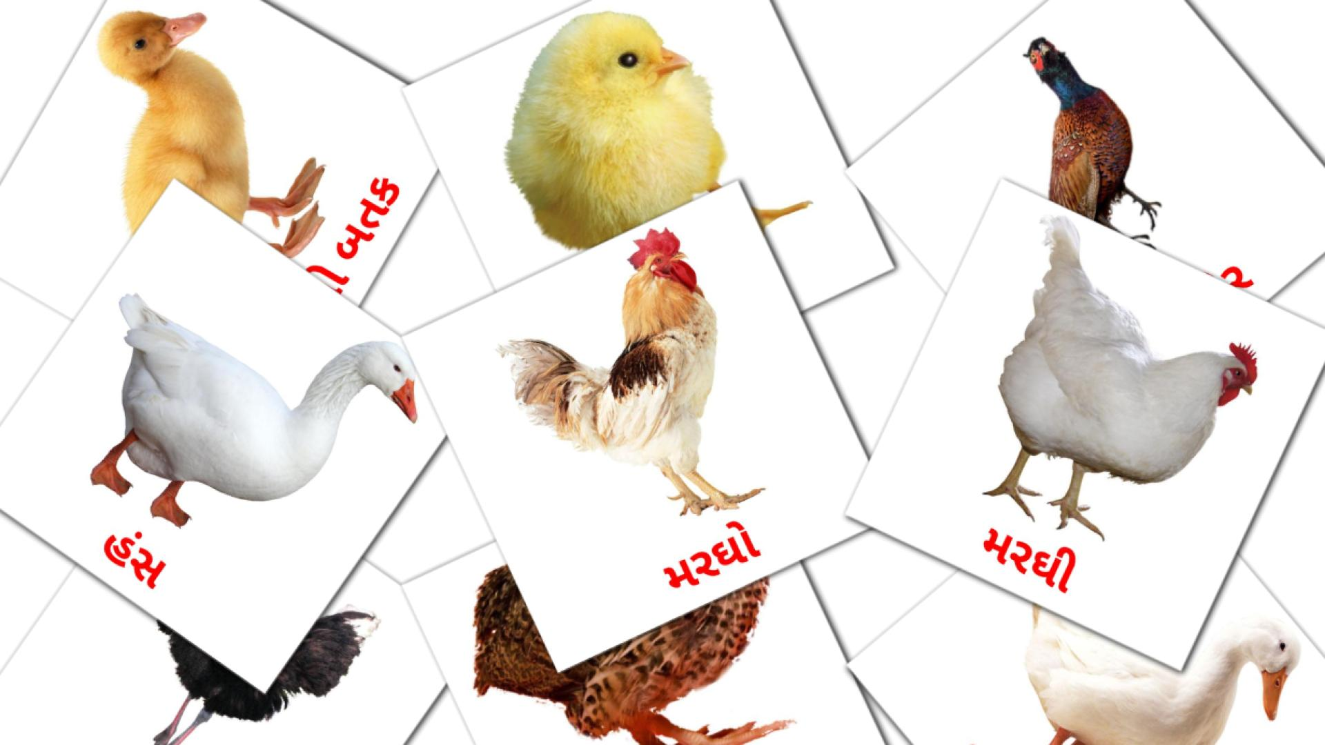 Farm birds flashcards