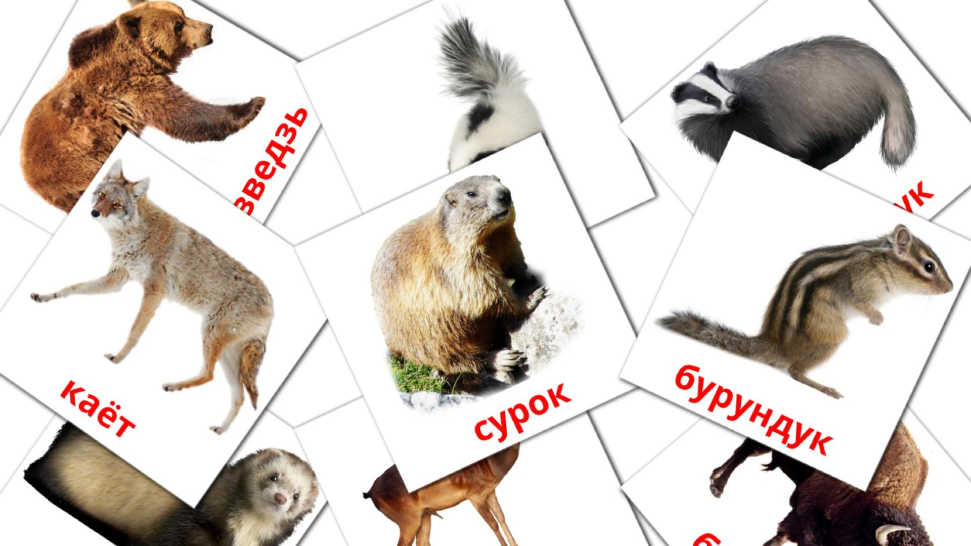 Forest animals flashcards