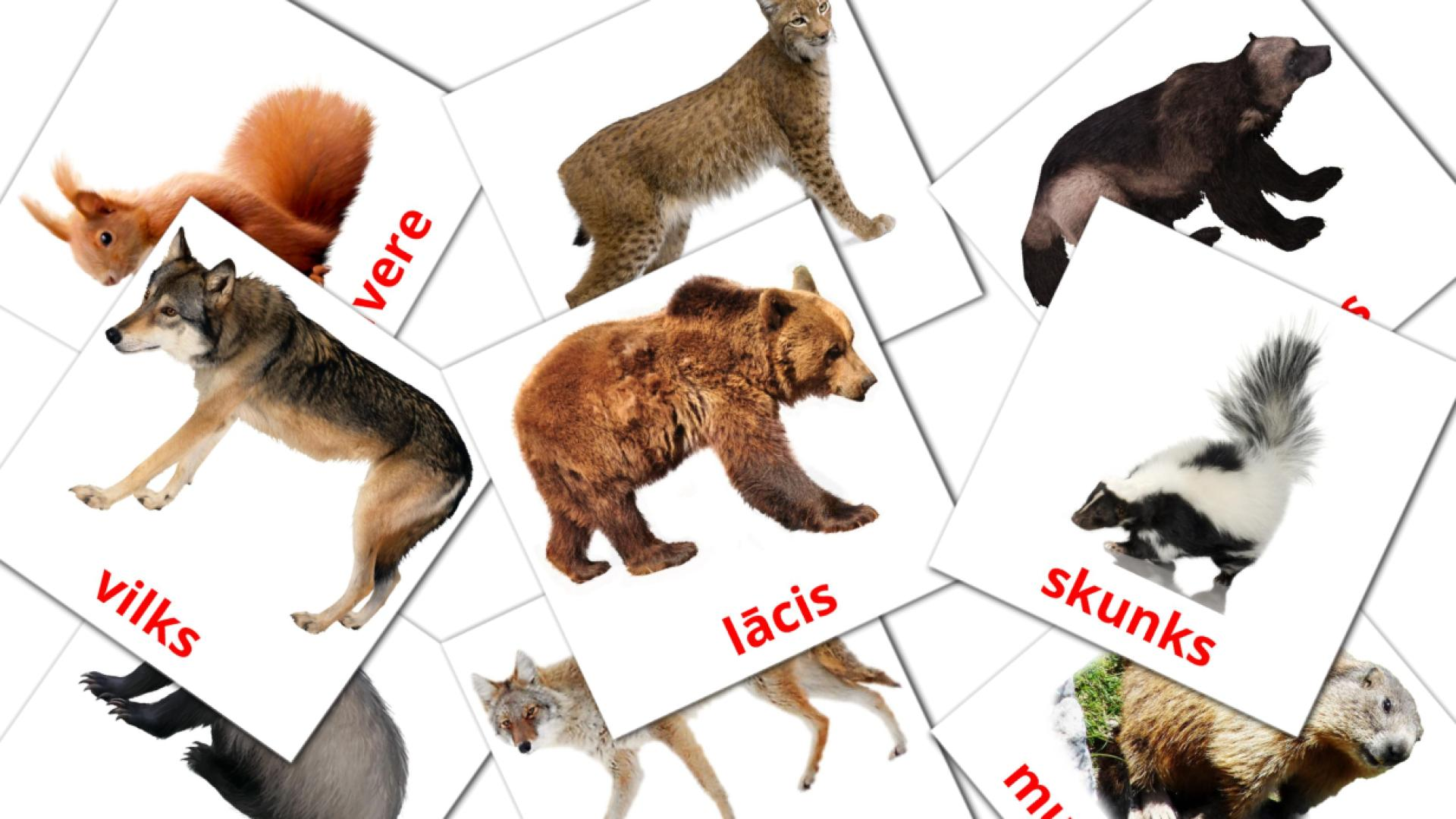 Forest animals flashcards