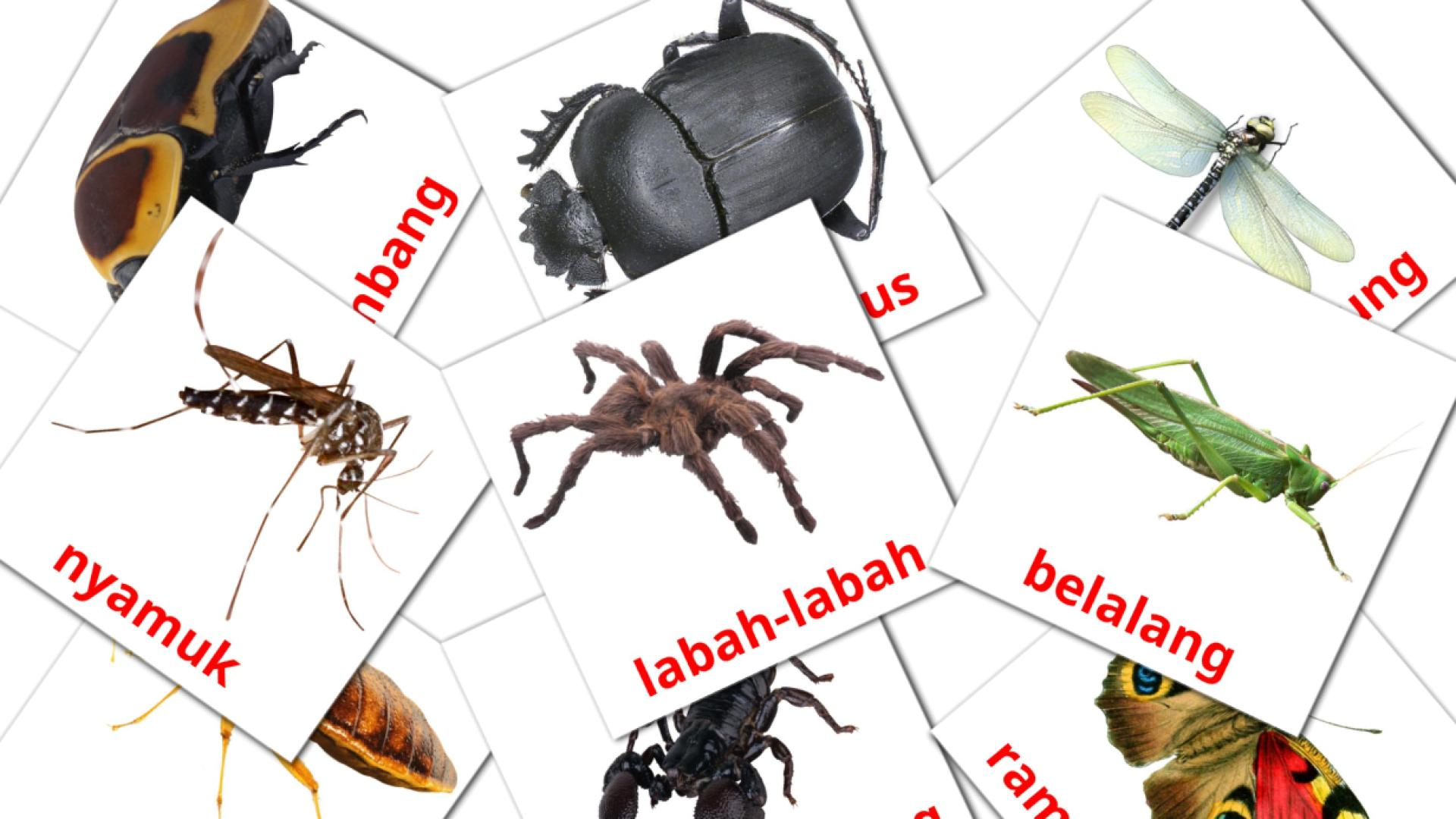 Insects flashcards