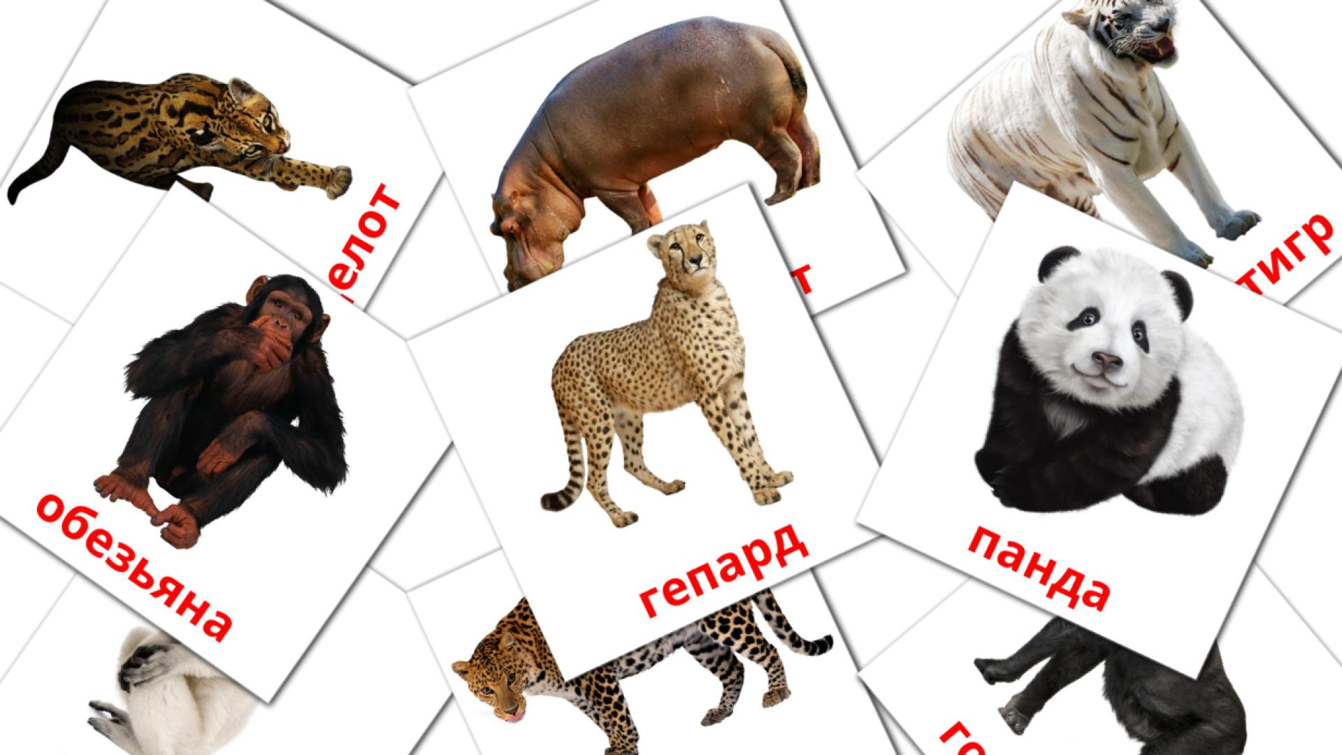 Jungle animals flashcards