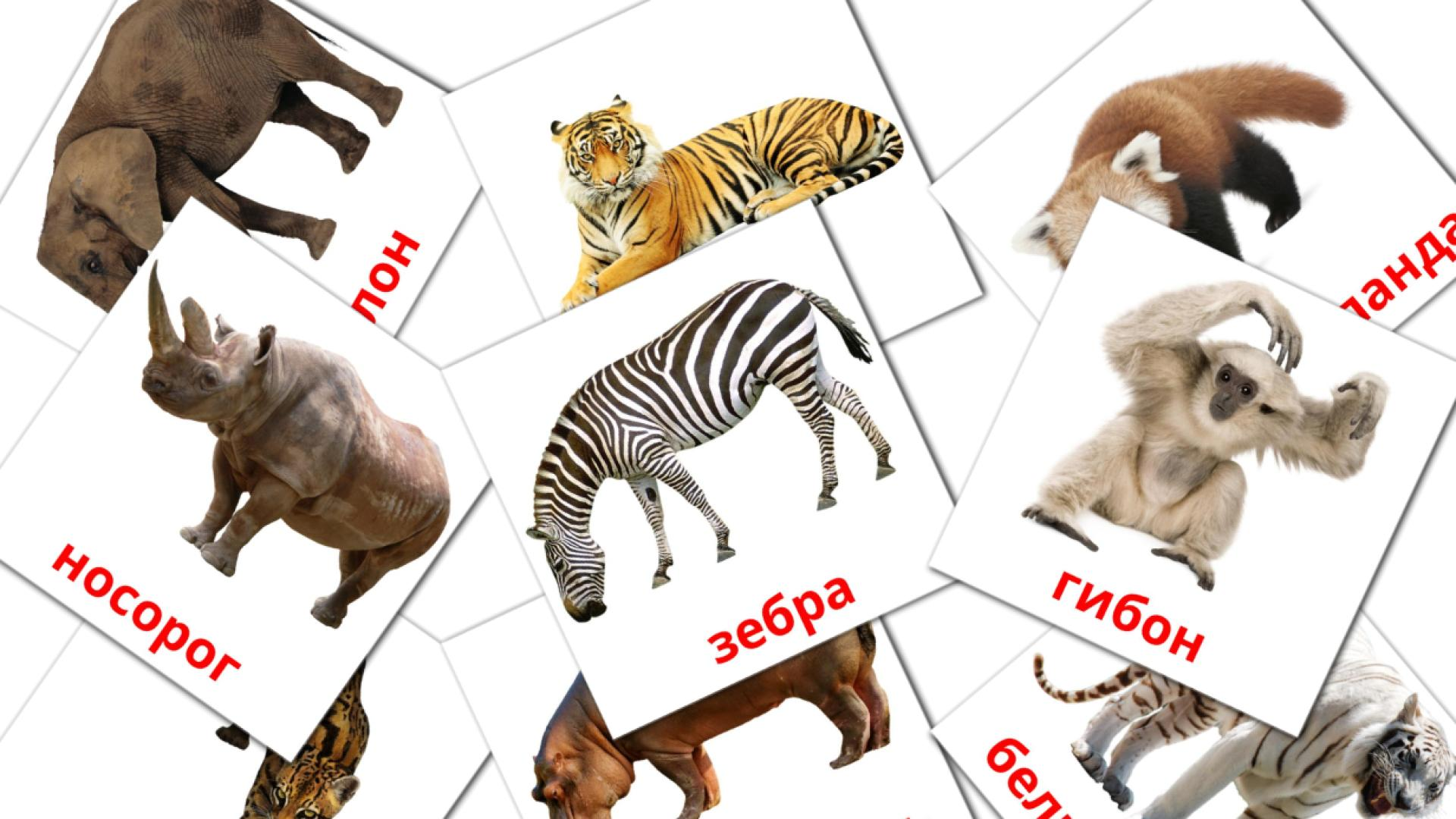 Jungle animals flashcards