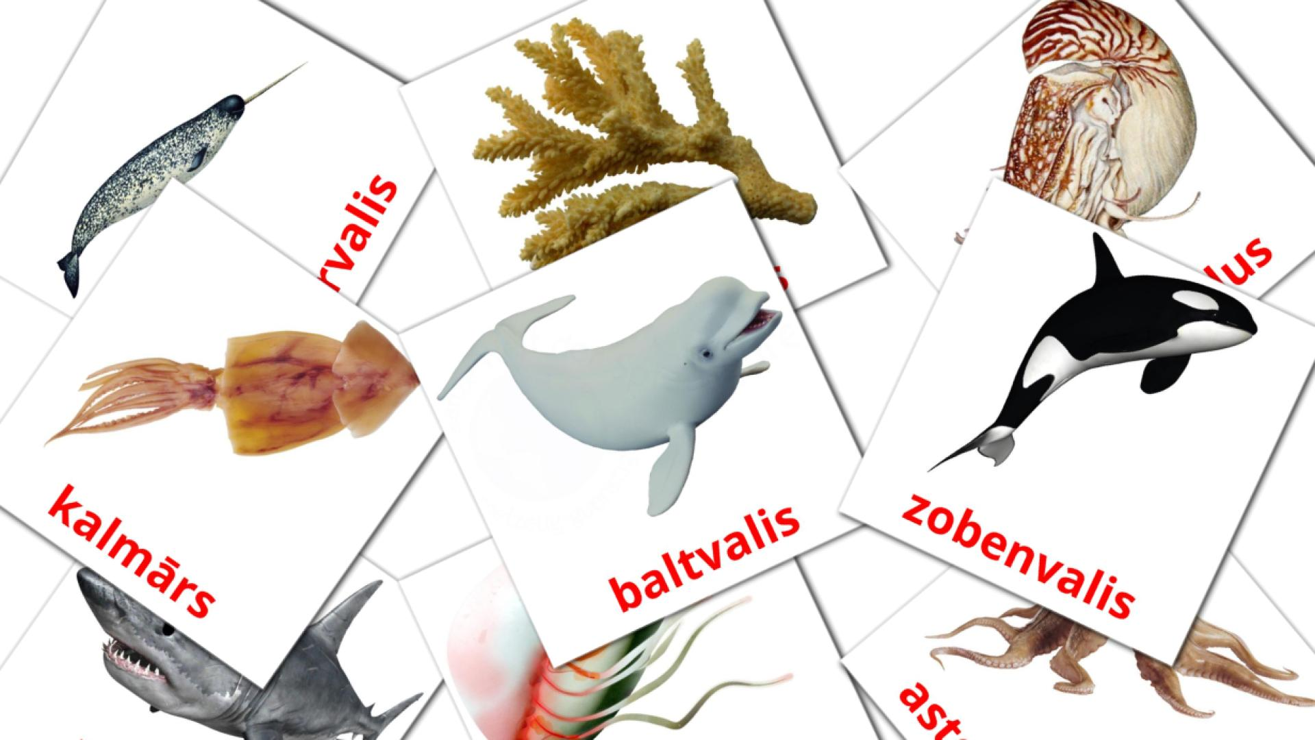 Sea animals flashcards