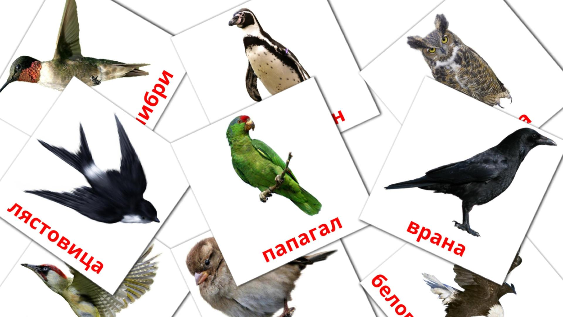 Wild birds flashcards