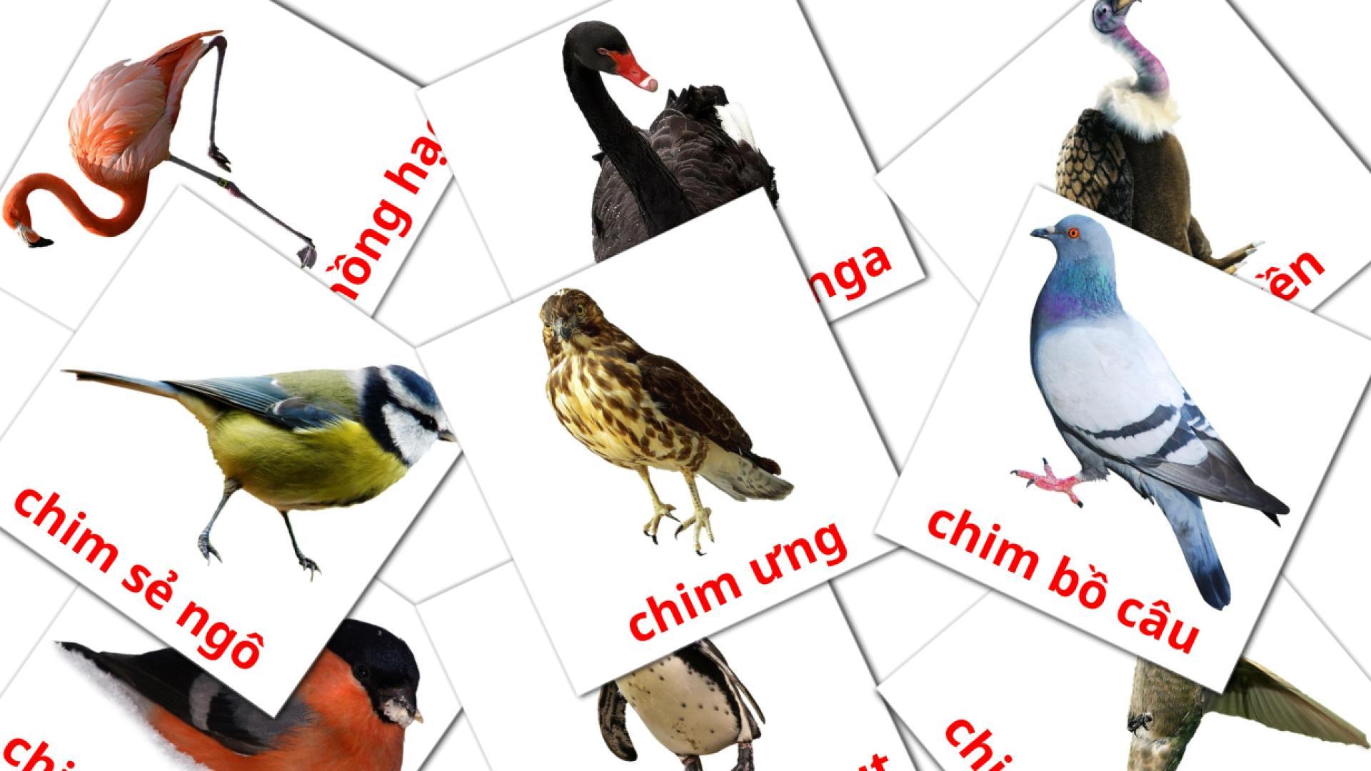 Wild birds flashcards