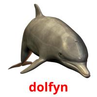 dolfyn picture flashcards
