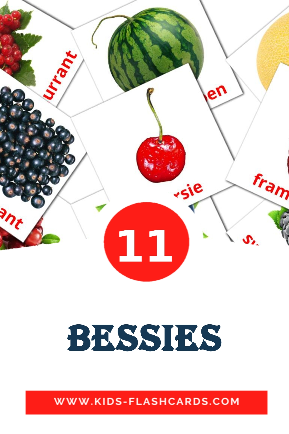 11 Bessies Picture Cards for Kindergarden in afrikaans