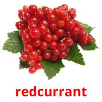 redcurrant picture flashcards