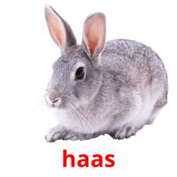haas picture flashcards
