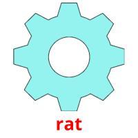 rat picture flashcards