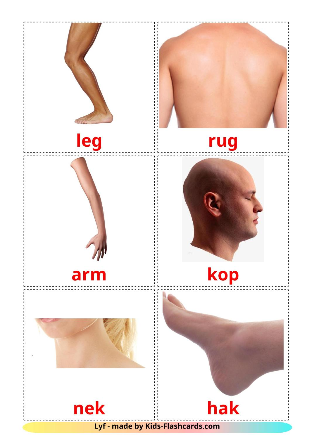 Body Parts - 26 Free Printable afrikaans Flashcards