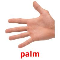 palm picture flashcards