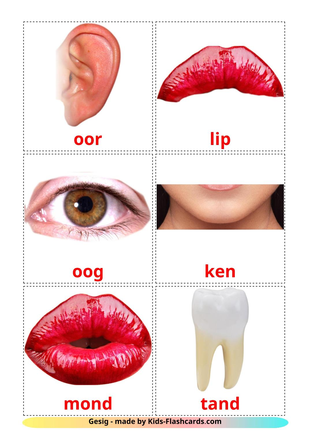 Face - 20 Free Printable afrikaans Flashcards