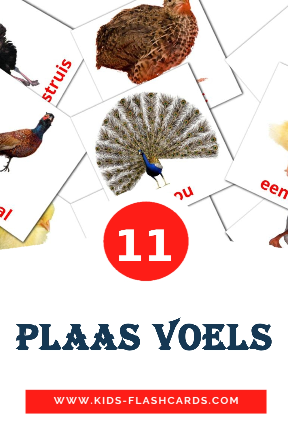 11 Plaas Voels Picture Cards for Kindergarden in afrikaans