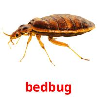 bedbug picture flashcards