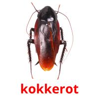 kokkerot picture flashcards