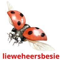 lieweheersbesie picture flashcards