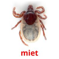 miet picture flashcards