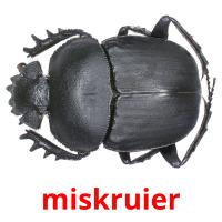 miskruier picture flashcards