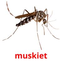 muskiet picture flashcards