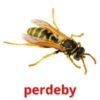 perdeby picture flashcards
