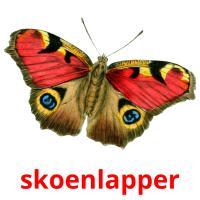 skoenlapper picture flashcards