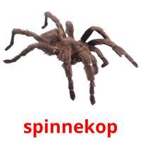 spinnekop picture flashcards