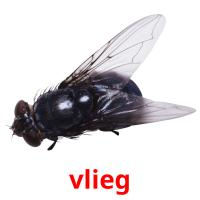 vlieg picture flashcards