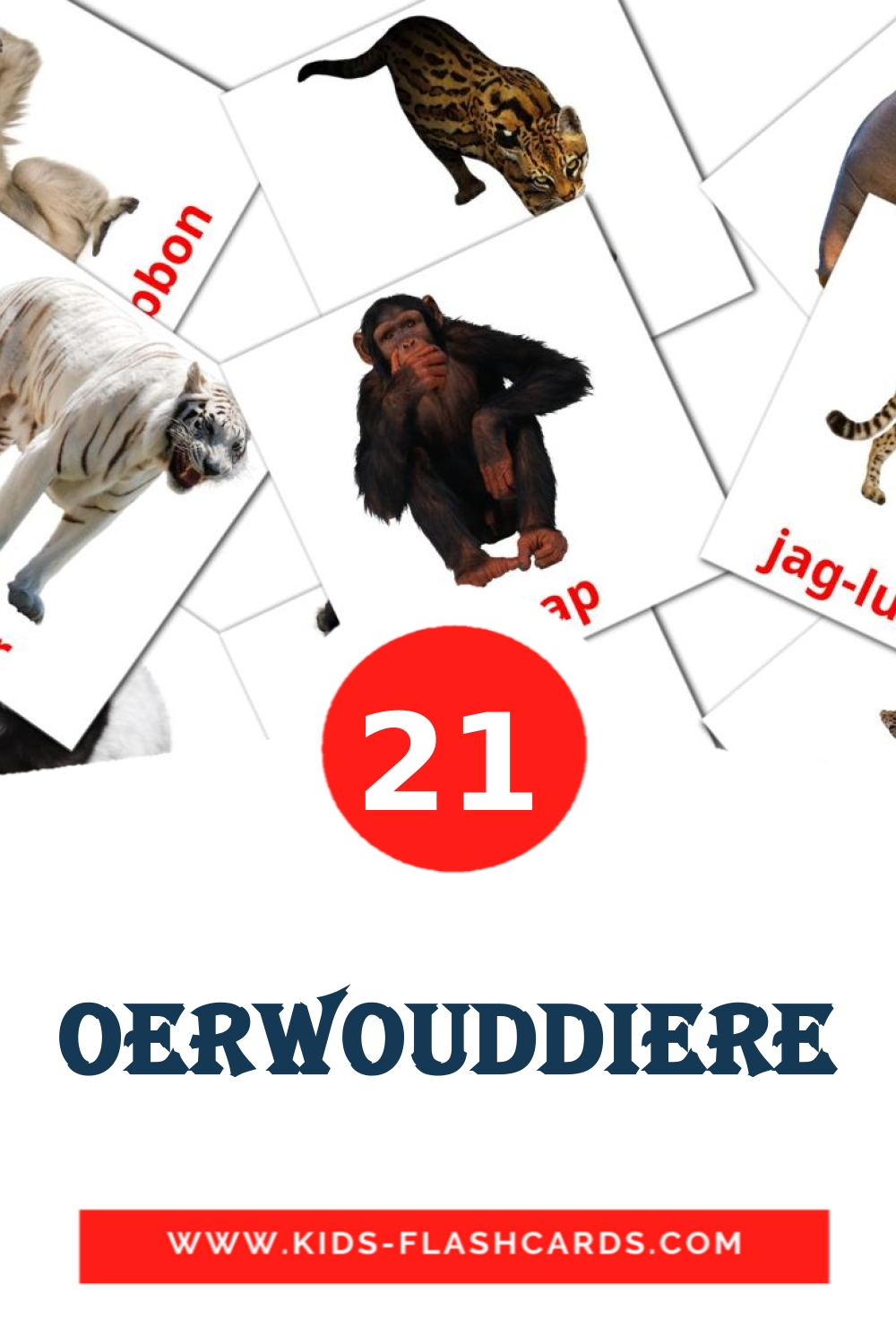 21 Oerwouddiere Picture Cards for Kindergarden in afrikaans