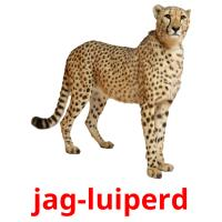 jag-luiperd card for translate