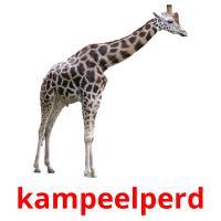 kampeelperd picture flashcards