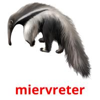 miervreter picture flashcards