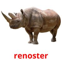 renoster picture flashcards