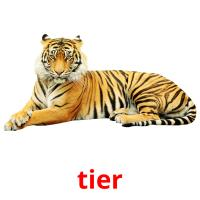 tier picture flashcards