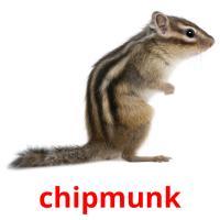 chipmunk picture flashcards