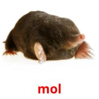 mol picture flashcards