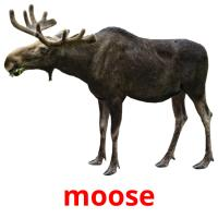 moose picture flashcards