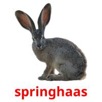 springhaas picture flashcards