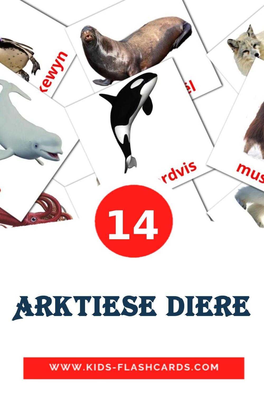14 Arktiese diere Picture Cards for Kindergarden in afrikaans